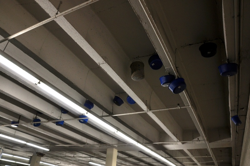 Leaky buckets lined the ceiling. It was very classy. (Photo by Umeiwa)