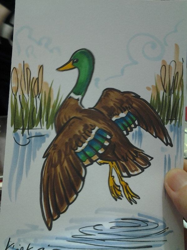 A nice duck!