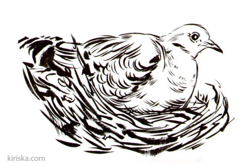 A dove with the Kuretake #40. Great variation in achievable strokes, as expected.