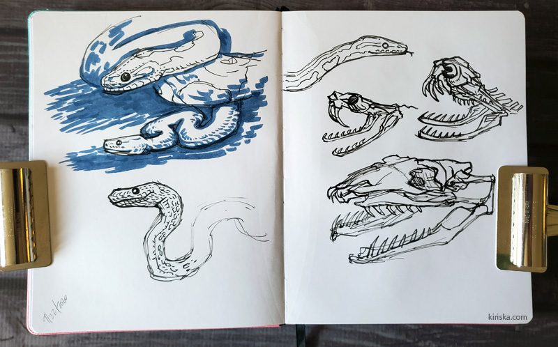 Open sketchbook with drawings of snakes and snake skulls