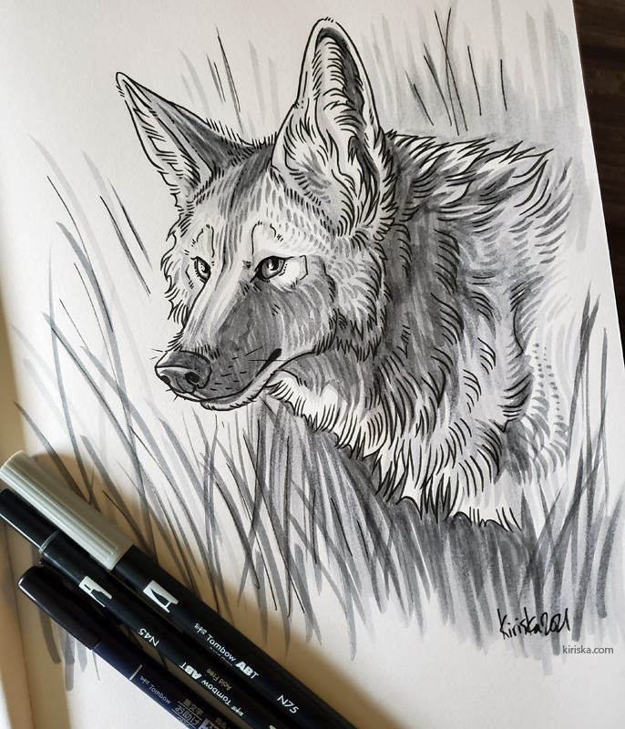 Drawing of a coyote with Tombow Dual Brush and Tombow Fudenosuke