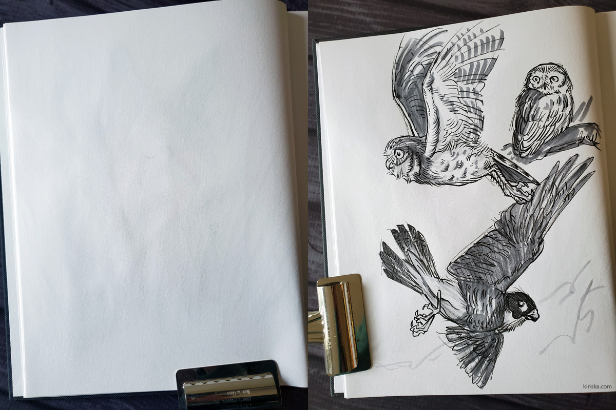 Reverse side of the coyote drawing, then with birds sketched over it