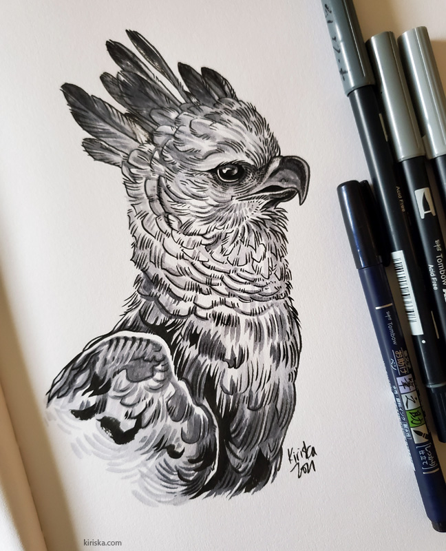Drawing of a Harpy eagle with the Tombow Fudenosuke and Tombow Dual Brush