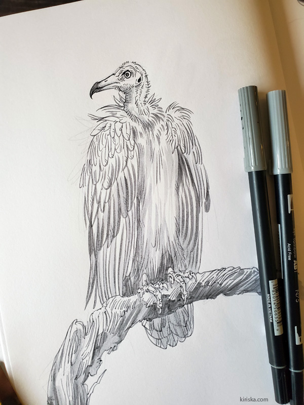 Drawing of a vulture with Tombow Dual Brush N75 & N55