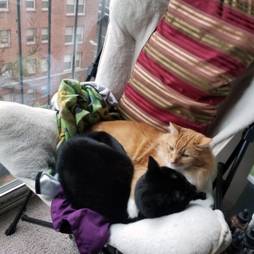 Two cats curled up in a papasan by the window.