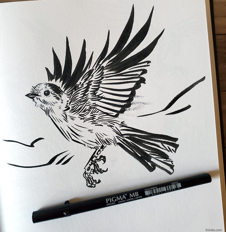 Canadian jay drawing with the Sakura Pigma Pro MB