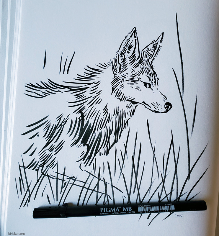 Coyote drawing with Sakura Pigma Pro MB