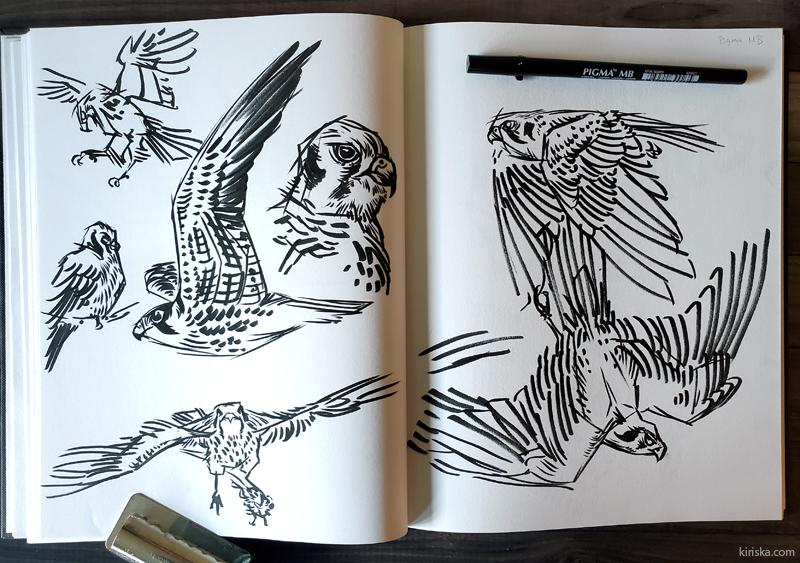 Falcon sketches with the Sakura Pigma Pro MB