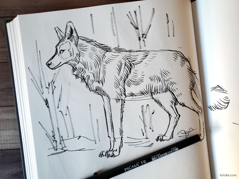 Wolf drawing with Sakura Pigma Pro FB