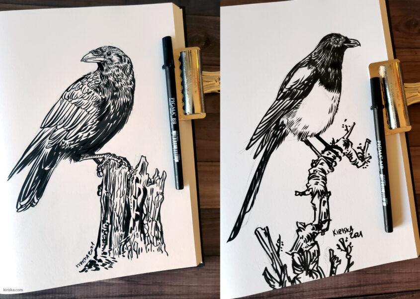 Corvid drawings with Sakura Pigma Pro BB and MB