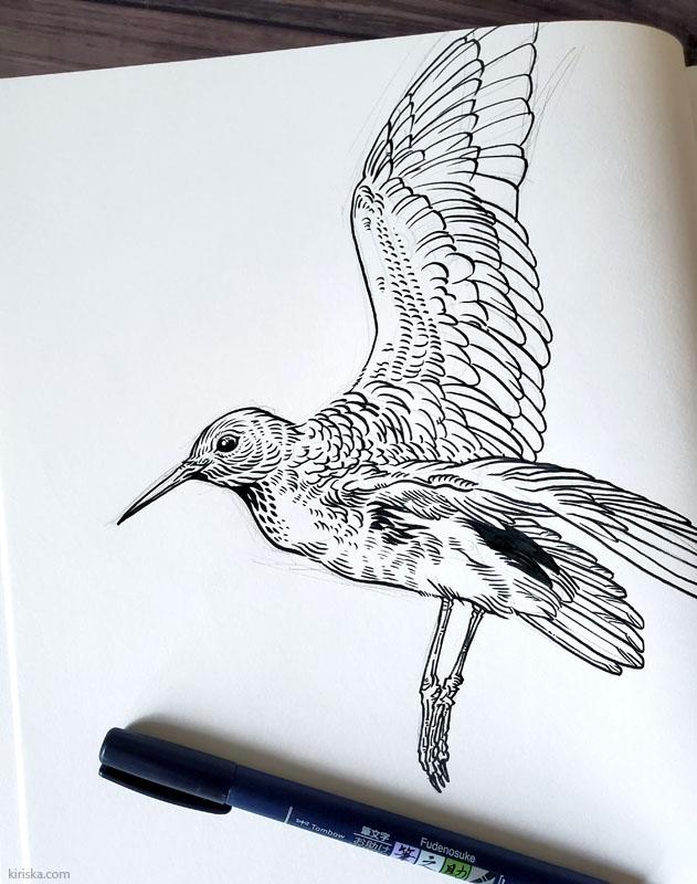 Bird drawing with Tombow Fudenosuke