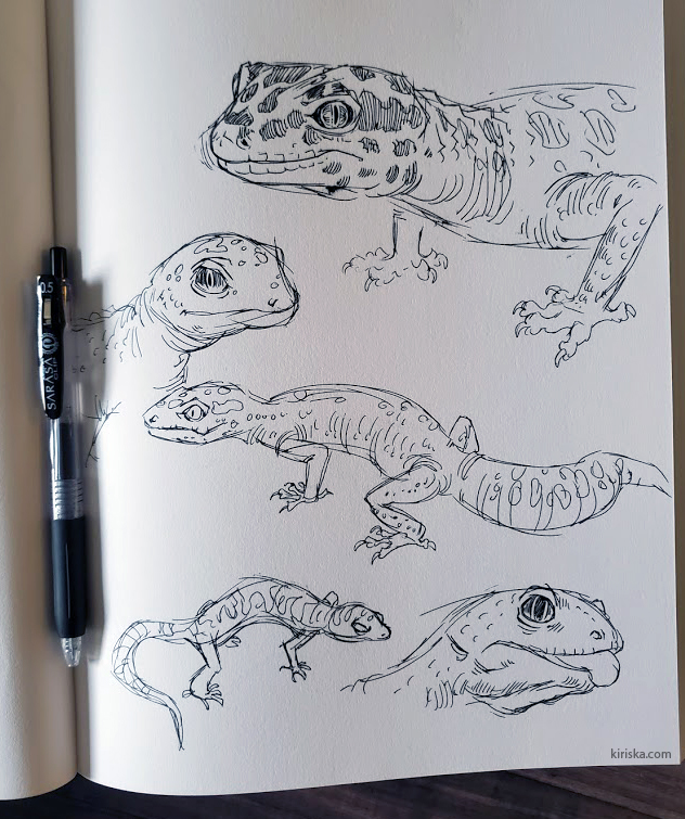Pen sketches of geckos