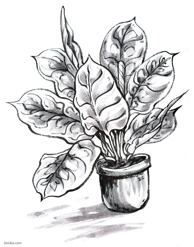 Calathea inked with Pentel Standard Brush and shaded with fountain pen ink