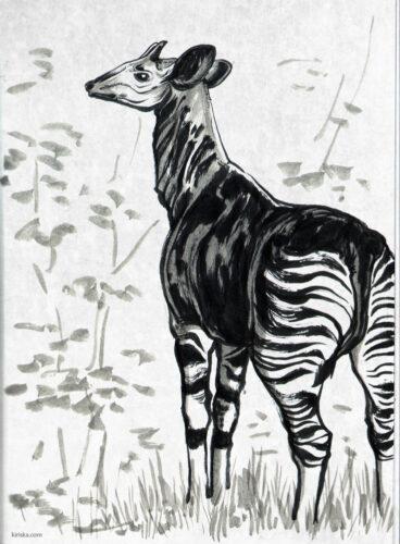 Pen sketch of an okapi