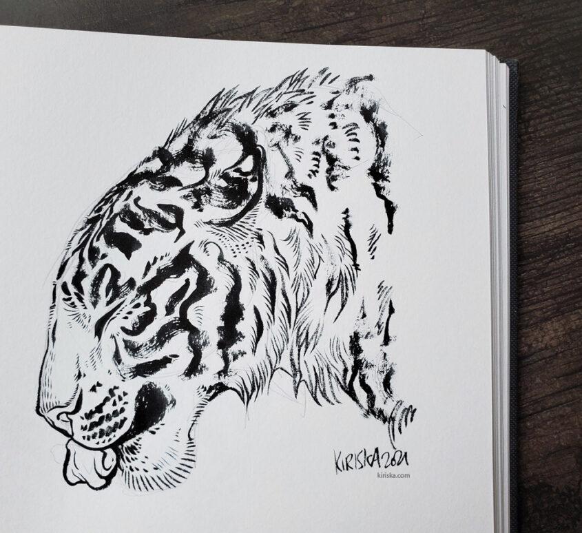 Tiger drinking water