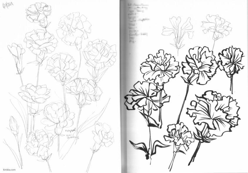 Carnation studies