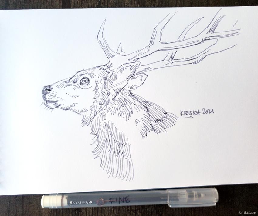 Sika deer drawing with the Kuretake Karappo 0.4 mm fineliner