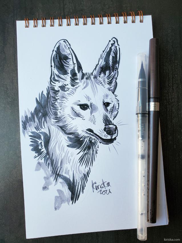 Maned wolf sketch with Kuretake Karappo and Kuretake #8