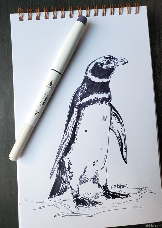 Drawing of a Magellanic penguin with Sailor Shikiori Chushu